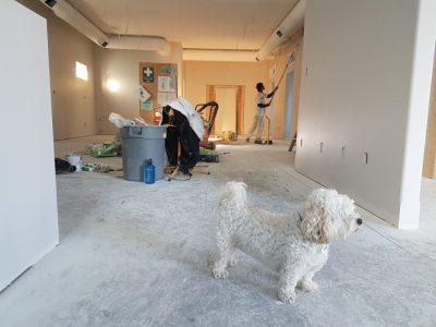 Urządzanie mieszkania - malowanie ścian - biały piesek